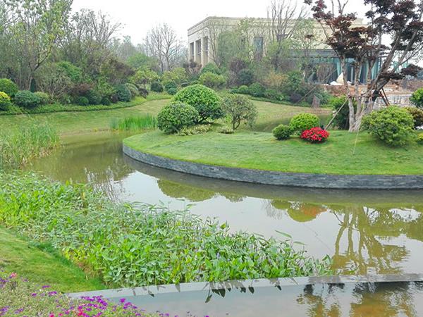国际生态新城景观湖水质净化与生态修复龙8娱乐网页版